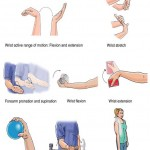 medial-epicondylitisgolfer-elbowrehabilition-exercises